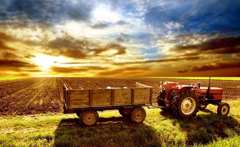 Кои са етапите на сеитба в зърнопроизводството?