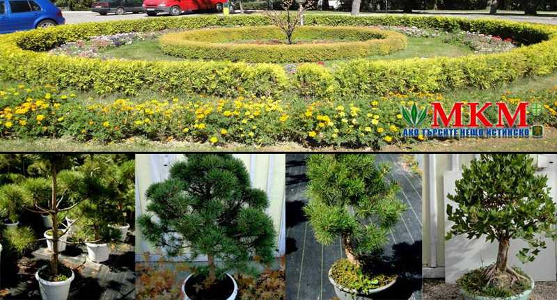 Озеленяване в град Пловдив | МКМ 61 ЕООД