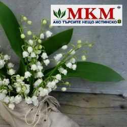 mkm-61-i2