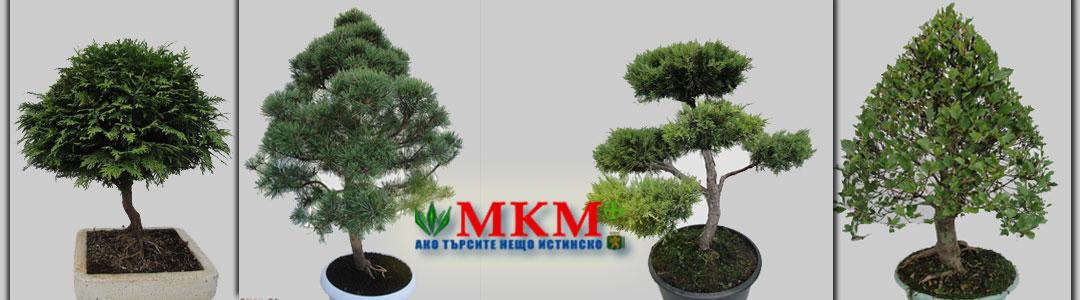Озеленяване в Пловдив и региона | МКМ 61